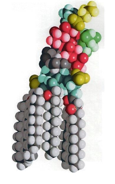 E. coli Lipopolysaccharide
